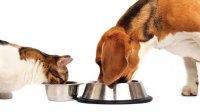 Cibo e Accessori per Cani Cosenza e Provincia